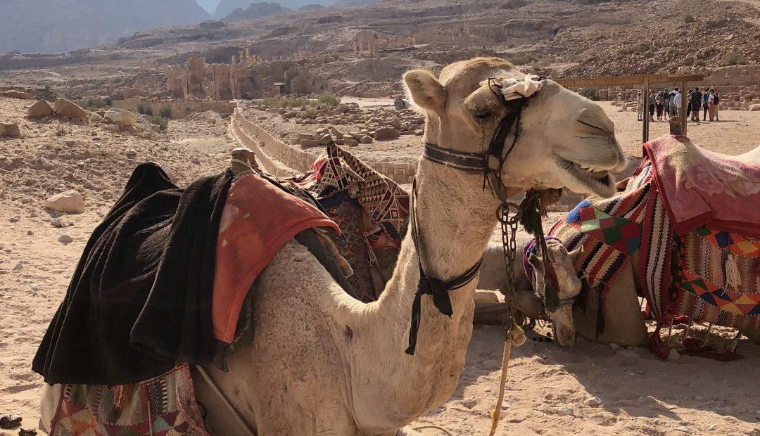 Camel Face! Wadi Rum, Jordan